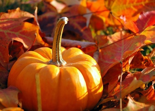 fall-leaves-pumpkins-1